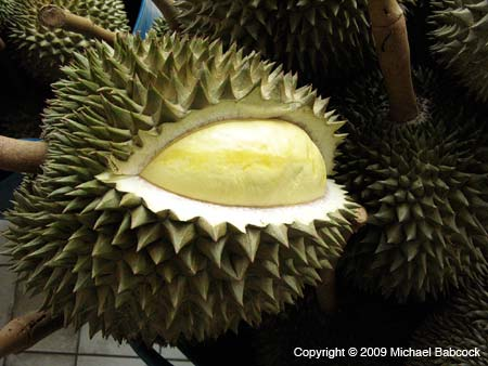 Durian, outer and inner