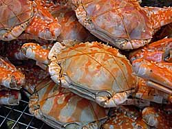 Crabs at Or Tor Kor