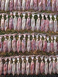 Squid drying on a rack