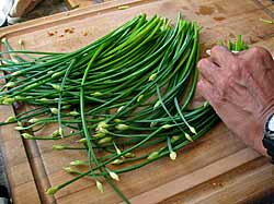 Chopping Garlic Chives