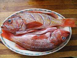 Two snapper on a plate