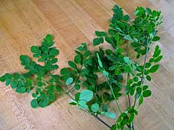 Moringa Leaves