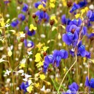 Two Wildflowers thumbnail