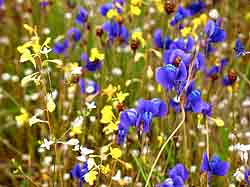 Two Wildflowers