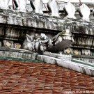 Temple Roof thumbnail