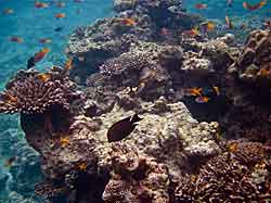 Damaged Reef